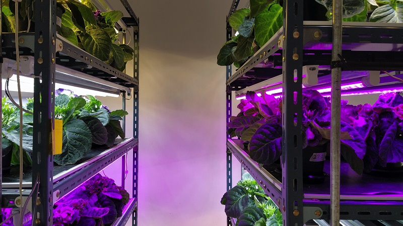 hydroponie-autonomie-alimentaire