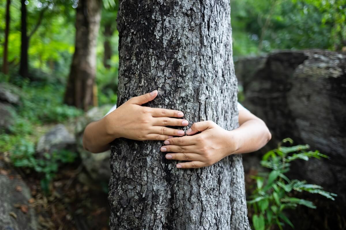 Ressilience arbres changements climatiques